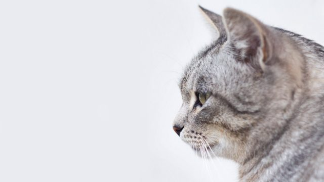 Kako ti tako i tvoja mačka treba uravnoteženu prehranu