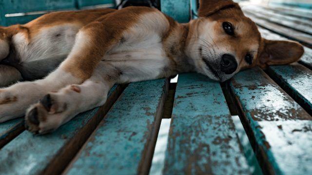5 super razloga zašto udomiti starijeg psa